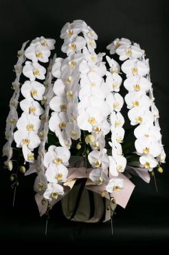 胡蝶蘭を秦野市内へ…